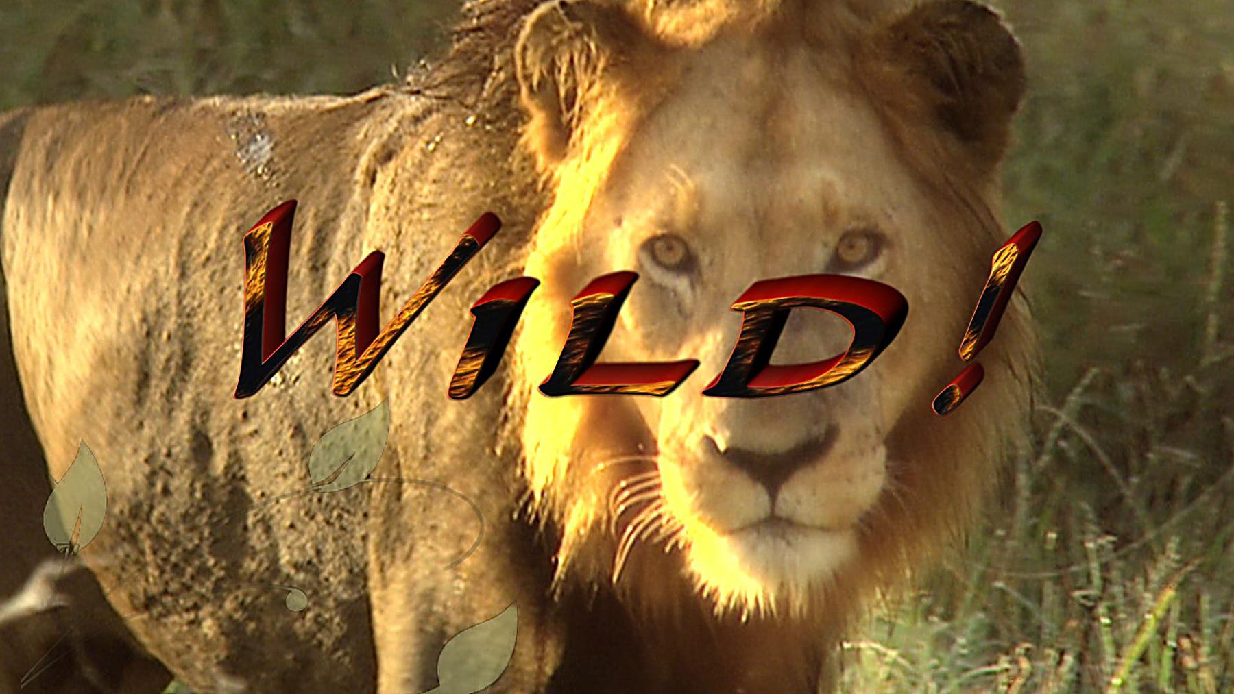 Wild! 1100s